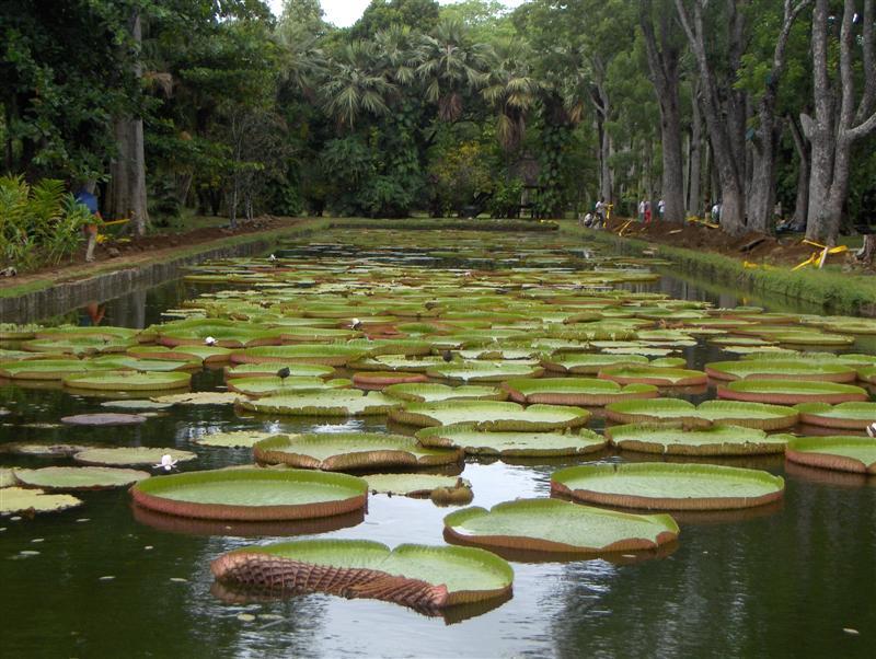 Galleria foto mauritius - Giardino delle ninfee ...